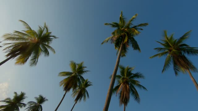 palm trees against blue sky in costa rica - palm tree stock videos & royalty-free footage