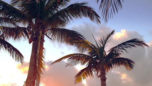 palm bäume gegen bewölkten himmel - palme stock-videos und b-roll-filmmaterial