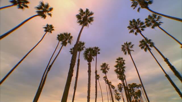 t/l ms la palm trees against overcast colorful sky, santa barbara, california, usa - santa barbara stock-videos und b-roll-filmmaterial