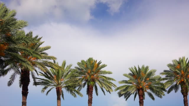 Palm Trees Against Sky as Clouds Pass By - Time Lapse