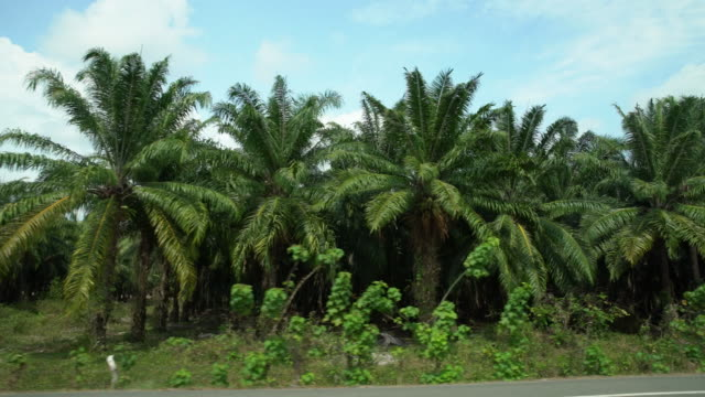 pov palm trees along a roadside - costa rica stock videos & royalty-free footage