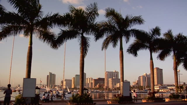 MS, Palm trees along Roxas Boulevard, office buildings in background, Manila, Philippines