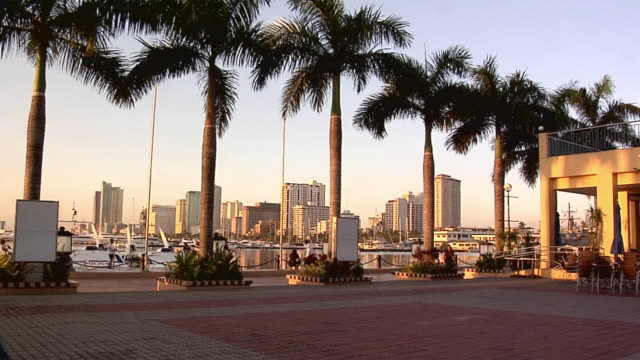 ms, pan, palm trees along roxas boulevard, office buildings in background, manila, philippines - パン効果点の映像素材/bロール