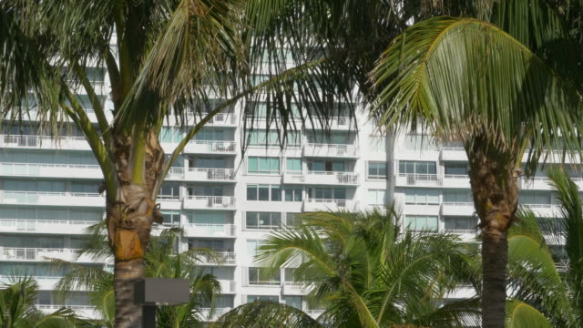 palm trees and apartment building in miami - 顕花植物点の映像素材/bロール
