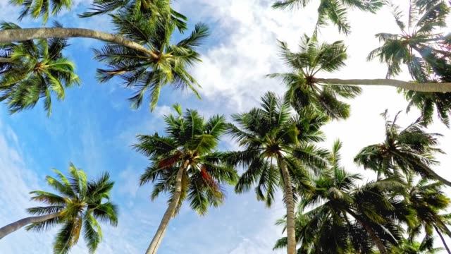 palm trees and blue skies - palm tree stock videos & royalty-free footage