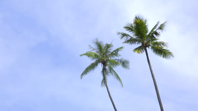 ws:palm trees and blue sky on tropical island - swaying stock videos & royalty-free footage