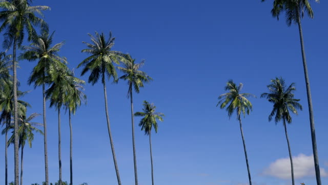 ws:palm trees and blue sky on tropical island - palm leaf stock videos & royalty-free footage