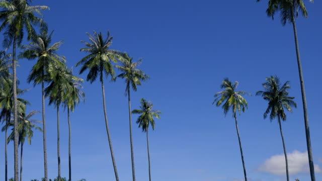 ws:palm bäume und blauem himmel tropische insel - schwanken stock-videos und b-roll-filmmaterial