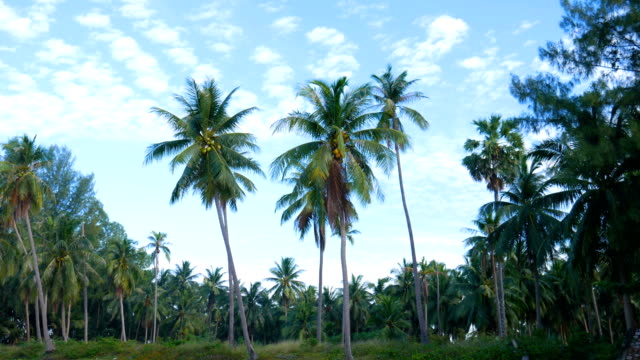 palm trees and blue sky on tropical island - palm leaf stock videos and b-roll footage