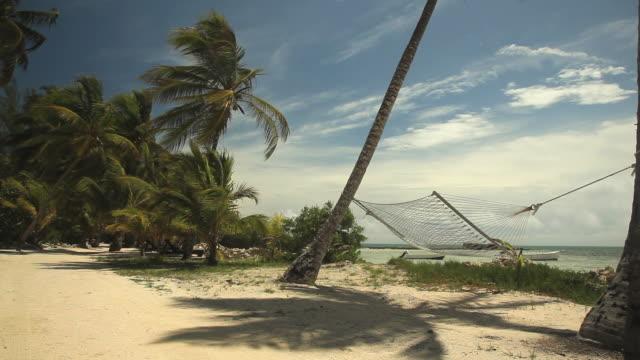 vídeos y material grabado en eventos de stock de ws palm trees and hammock on beach / nassau, new providence, bahamas  - bahamas