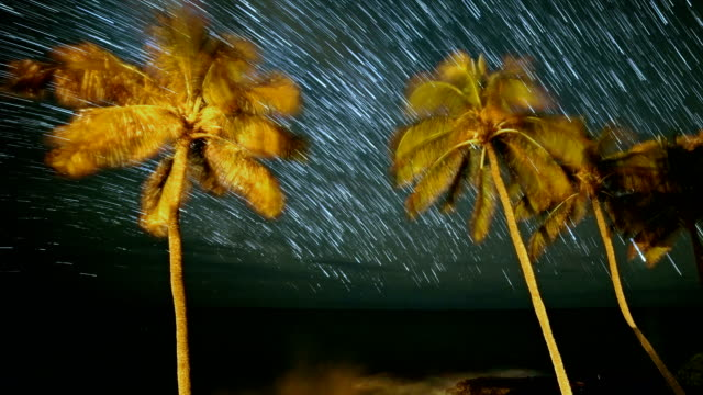 Palm Trees and Ocean in Hawaii Star Trails Night Time Lapse