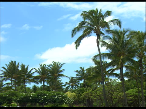 palm trees and other vegetation against blue sky - tropical tree stock videos & royalty-free footage