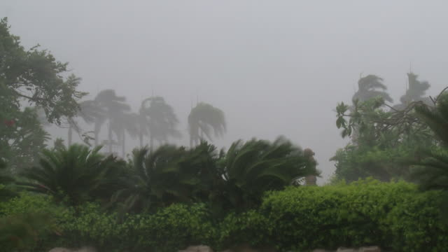 palm trees and plants thrash wildly in core of powerful typhoon, typhoon conson, china, 16 july 2010 / audio - typhoon stock videos and b-roll footage