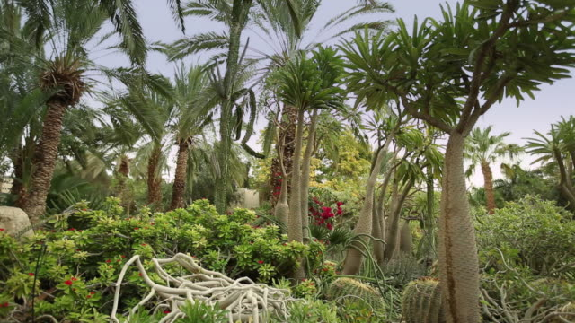 Palm trees and shrubs grow in Kibbutz Ein Gedi's botanical garden.