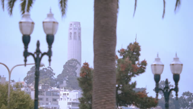 palm trees and street lights stand side-by-side in the embarcadero area of san francisco framing the coit tower. - coit tower stock videos & royalty-free footage