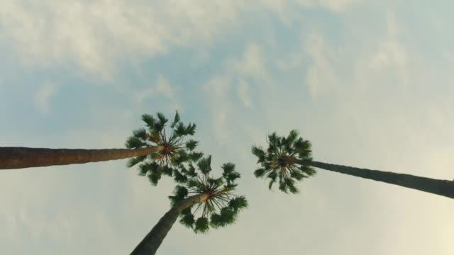 vídeos y material grabado en eventos de stock de palmeras y sol de verano - palmera