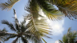Palm Trees And Sun In South Beach Miami Florida USA
