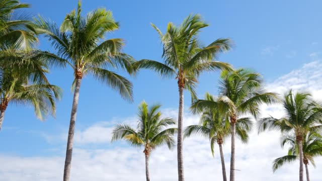 palm trees and sunny sky - palm tree stock videos & royalty-free footage
