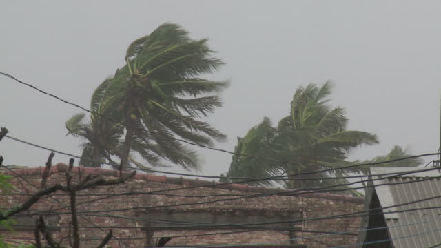 Palm trees and telephone wires blow in strong typhoon winds. Super Typhoon Megi or Juan, NE Luzon, Philippines Oct 2010 / AUDIO
