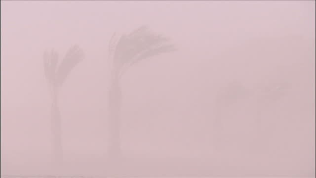 Palm trees are barely visible as they bend in a sandstorm. Available in HD