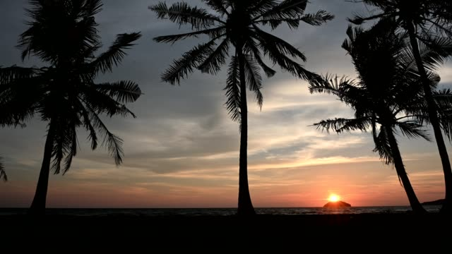 palm trees at beach - kota kinabalu stock videos and b-roll footage