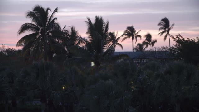 Palm trees at dusk / Provodenciales, Turks and Caicos Islands