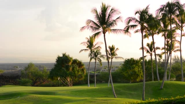 Palm trees at exclusive Kings Golf Course at Waikoloa Beach