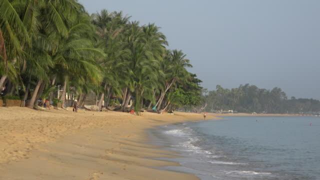 palm trees at sandy beach in the morning - ヤシ点の映像素材/bロール