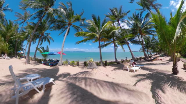palm trees at sandy beach - ko samui stock videos & royalty-free footage