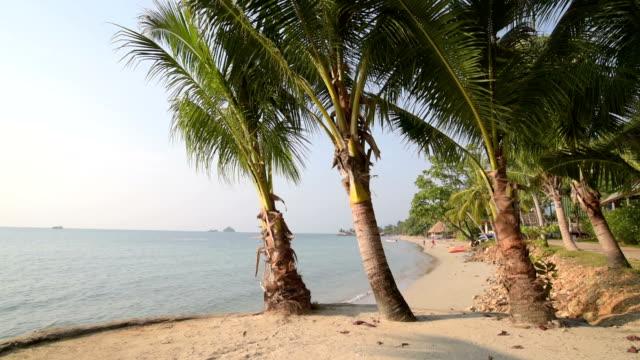 palm trees at sandy beach - ヤシの木点の映像素材/bロール
