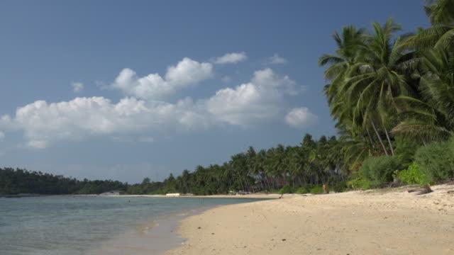palm trees at sandy beach - ヤシ点の映像素材/bロール