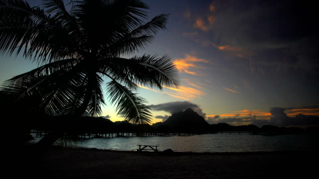 palm trees at sunrise paradise lagoon bora bora - polynesian ethnicity stock videos & royalty-free footage