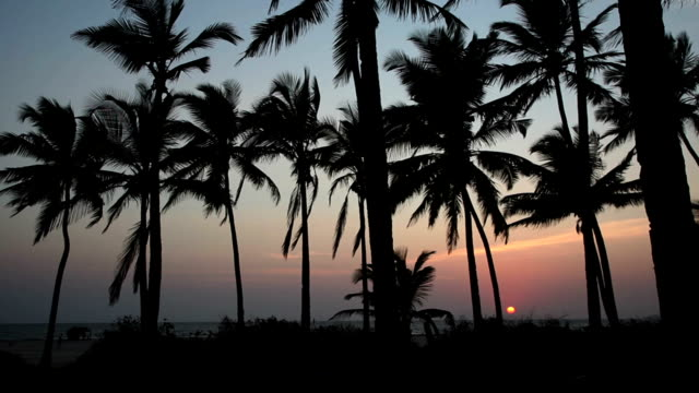 Palm trees at sunset. Goa India.