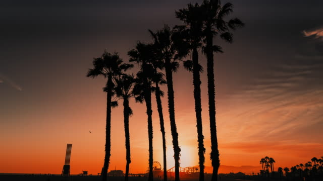 palm trees at sunset - santa monica beach stock videos & royalty-free footage