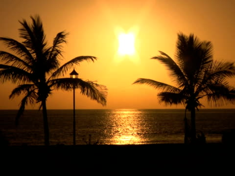 ntsc: palm trees at sunset - other stock videos & royalty-free footage