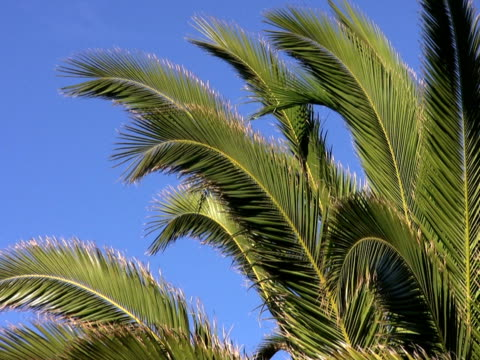 NTSC : Palm Trees at Sunset