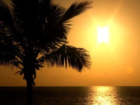 pal: palm trees at sunset - other stock videos & royalty-free footage