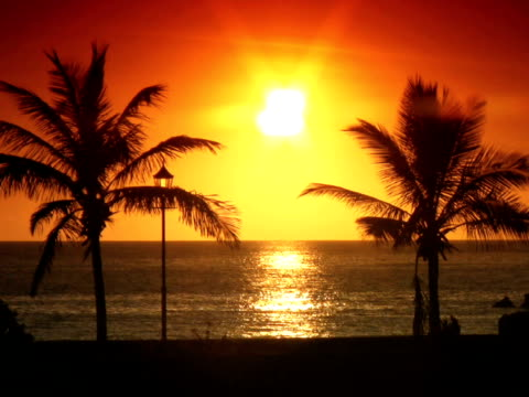 stockvideo's en b-roll-footage met pal: palm trees at sunset - bedektzadigen