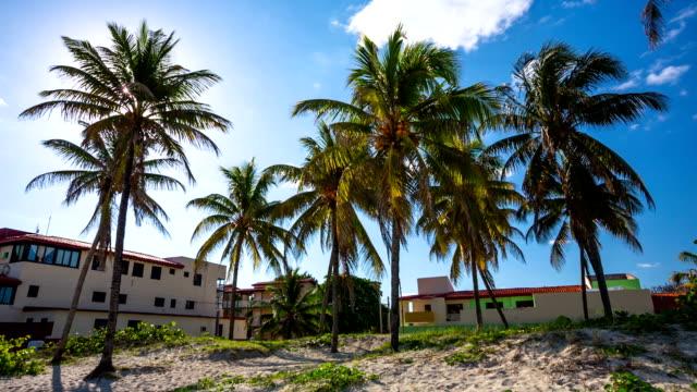 palm trees at varadero beach , cuba - varadero beach stock videos and b-roll footage