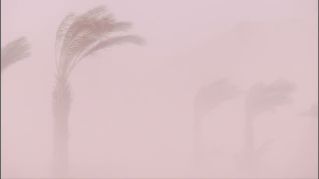 palm trees battered by a sand storm. available in hd - sandstorm stock videos & royalty-free footage
