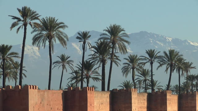 m zo ws palm trees behind surrounding city walls with atlas mountains in background / marrakech, morocco - desert oasis stock videos & royalty-free footage