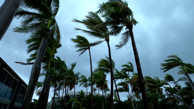 palm trees blow and sway in strong wind as tropical cyclone blake hits australia - palm tree stock videos & royalty-free footage