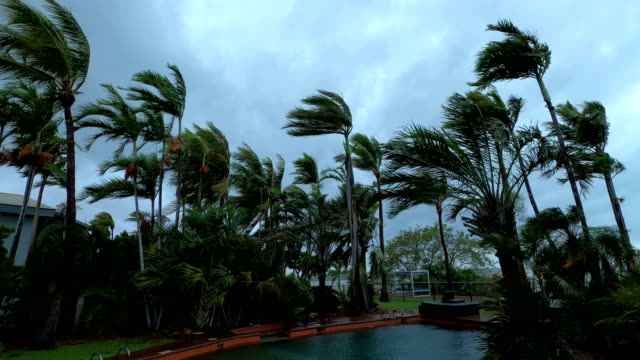 palm trees blow and sway in strong wind as tropical cyclone blake hits australia - vortex stock videos & royalty-free footage