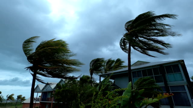 palm trees blow and sway in strong wind as tropical cyclone blake hits australia - tropical climate stock videos & royalty-free footage