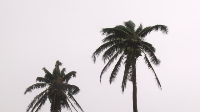 palm trees blow in strong winds of approaching tropical storm. super typhoon megi or juan, ne luzon, philippines oct 2010 / audio - luzon stock videos & royalty-free footage