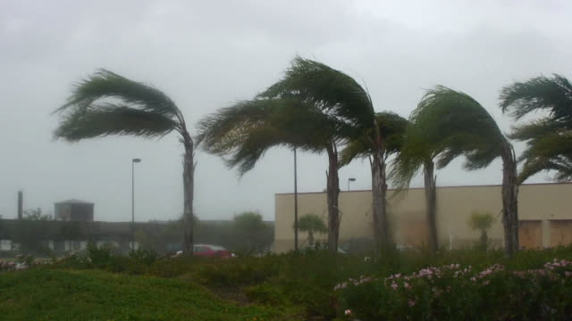 vídeos de stock, filmes e b-roll de palm trees blowing during hurricane. - condições meteorológicas extremas