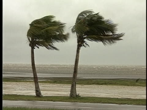 palm trees blowing in the wind along the beach during hurricane andrew. - palm tree stock videos & royalty-free footage