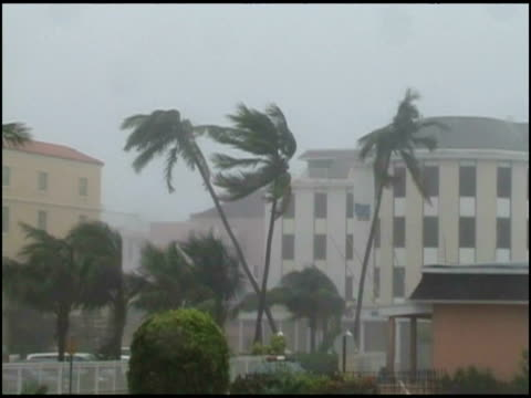WA Palm trees blowing in tropical storm, In town, USA