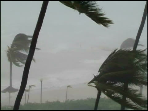 MWA Palm trees blowing in tropical storm, USA