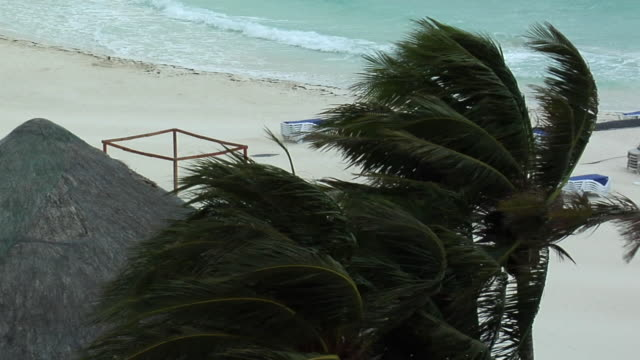 ms ha palm trees blowing in wind as storm approaches, isla mujeres, quintana roo, mexico - quintana roo stock videos and b-roll footage